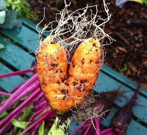 hairy heart (carrot)
