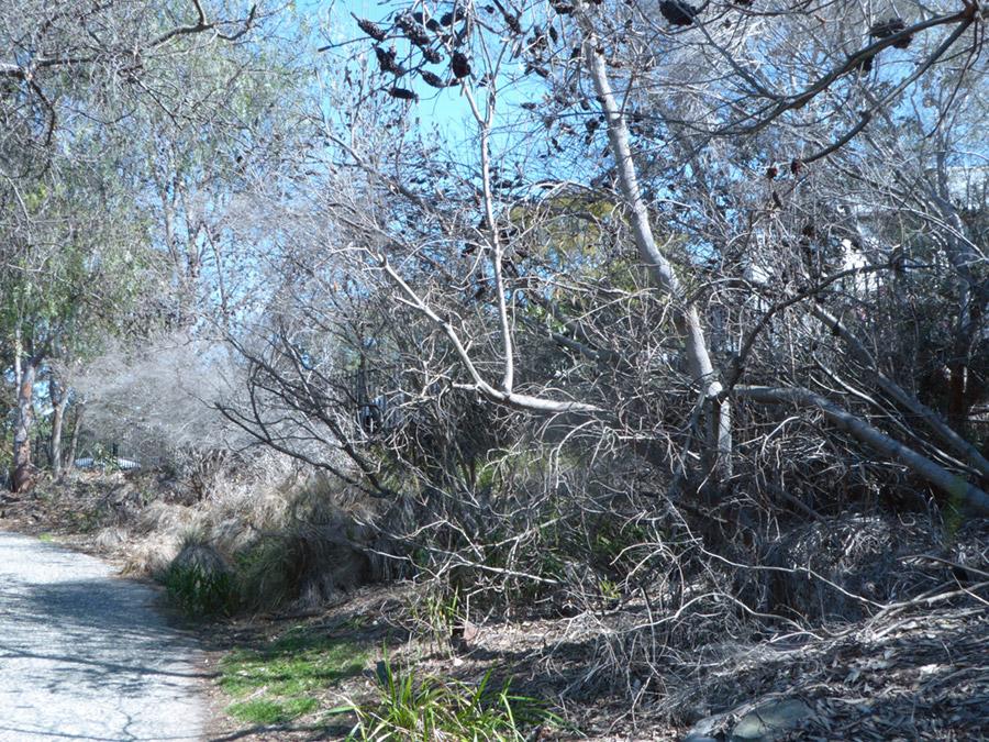 Poisoned-trees