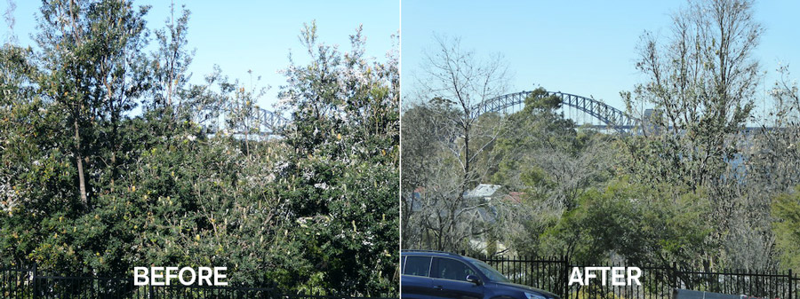 TREES-BEFORE-AFTER